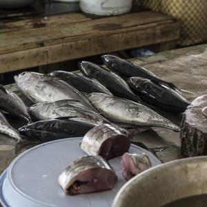 Fresh tuna at Phan Rang fresh market